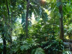 Biodome_-_Foret_tropicale_1.JPG